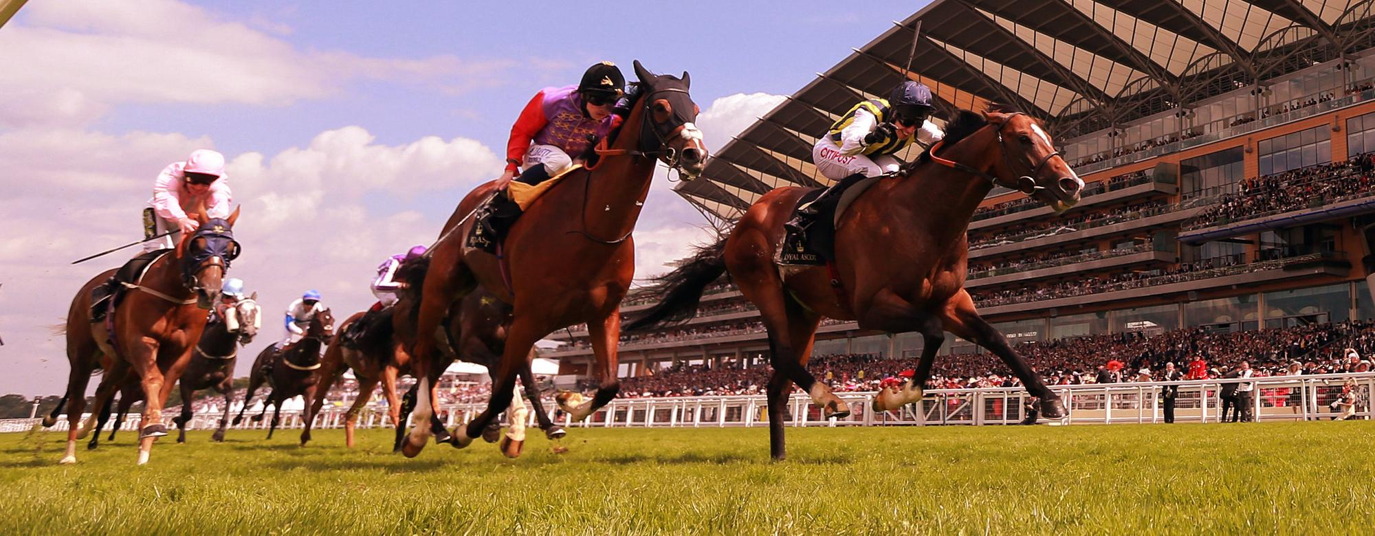 Horses Racing on Ascot Race Course